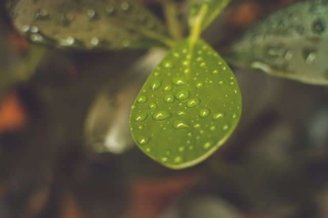 GrønPlanet klima