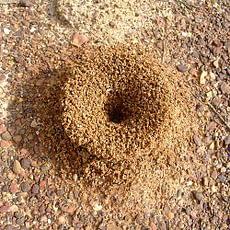 Insektbekæmpelse